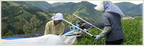 消費者がイメージする「おいしいお茶」は、静岡産