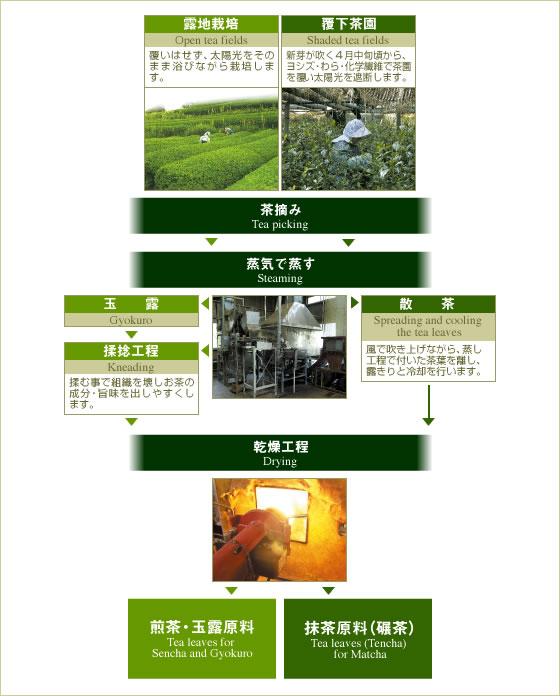 煎茶と抹茶原料葉における栽培方法・加工法の違い